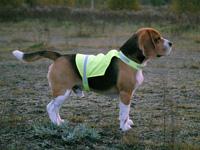 Kamizelka odblaskowa dla psów