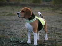 Kamizelki odblaskowe dla psów