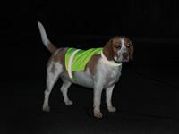 Kamizelka odblaskowa dla psów - po zmroku