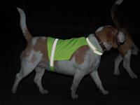 Kamizelka odblaskowa dla psów w ciemności