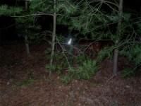 Pies z opaską lokalizacyjną w lesie nocą
