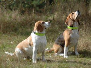 Psy z opaskami diodowymi