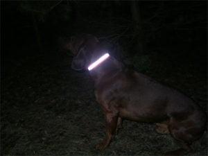 Opaska odblaskowa dla psa w nocy
