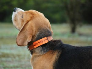Adresówka dla psa