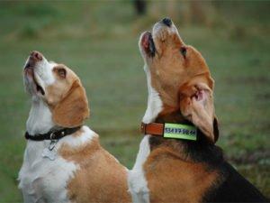 Psy z adresówkami