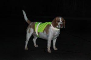 Pies w żółtej kamizelce w nocy
