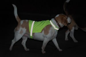 Pies w kamizelce odblaskowej nocą